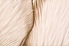 在蘑菇的样式 图库摄影