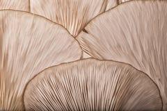 在蘑菇的样式 库存照片