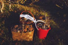 在蘑菇的森林 库存图片