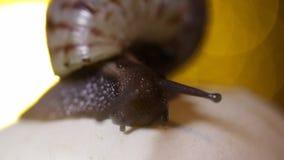 在蘑菇的蜗牛 影视素材