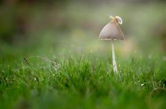在蘑菇的蜗牛 图库摄影