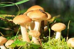 在蘑菇的飞行 免版税库存图片