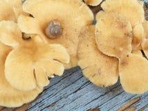 在蘑菇紧贴的蜗牛壳 库存图片