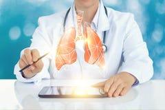 在虚屏上的医生显示一个人的肺的模型 库存图片