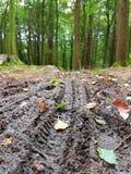 在虽则泥的登山车轨道Forrest 免版税库存图片