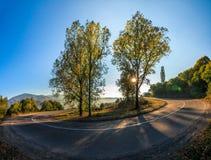 在蛇纹石的树在日出的山 库存图片