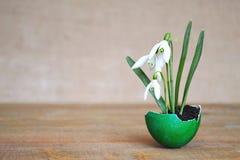 在蛋壳的春天花 免版税图库摄影