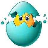 在蛋壳的逗人喜爱的复活节小鸡 皇族释放例证