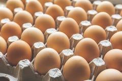 在蛋盒的新鲜的农厂鸡蛋 库存图片