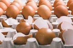 在蛋盒的蛋壳 免版税库存图片