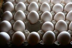 在蛋盘子或蛋纸盒的一个缺掉鸡蛋 库存图片