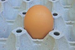 在蛋盘子的鸡蛋 免版税库存照片