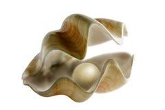 在蛤蜊的珍珠 免版税库存图片