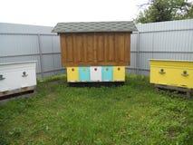 在蜂中的蜂 免版税图库摄影