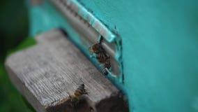 在蜂房外面的蜂 股票录像