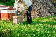 在蜂房的工作 免版税库存图片