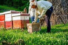 在蜂房的工作 免版税库存照片