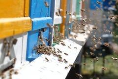 在蜂房的蜂房 库存图片