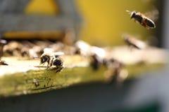 在蜂房的蜂房 库存照片