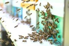 在蜂房的蜂房 免版税库存图片