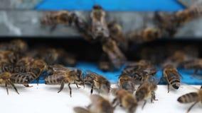在蜂房的蜂房 股票视频