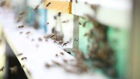 在蜂房的蜂房 影视素材