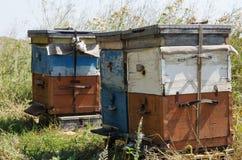 在蜂房的蜂蜂房 库存图片