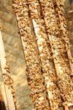 在蜂房的蜂 免版税库存图片