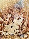 在蜂房背景里面的蜂 免版税库存图片
