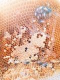 在蜂房里面的蜂 免版税图库摄影