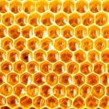在蜂窝特写镜头的蜂蜜 免版税库存图片