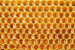 在蜂窝的健康食物蜂蜂蜜 免版税库存图片