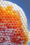 在蜂窝的新鲜的蜂蜜 免版税库存照片