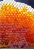 在蜂窝的新鲜的蜂蜜 免版税库存图片