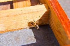 在蜂箱的一只蜂 免版税库存图片