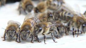 在蜂箱的蜂 股票录像