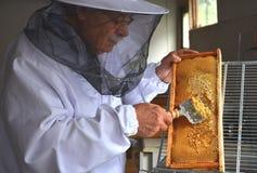 在蜂蜜收获期间的养蜂家分开的蜂窝 免版税库存图片