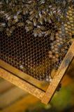 在蜂蜜梳子的蜂 免版税图库摄影