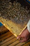 在蜂蜜梳子的蜂 免版税库存图片
