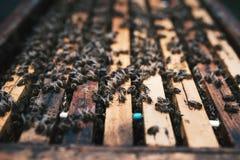 在蜂蜜的细节在蜂窝 养蜂业的概念 免版税库存照片