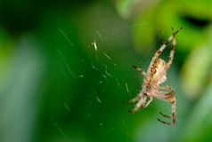 在蜘蛛之下 库存图片