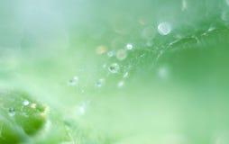 在蜘蛛网的宏观露滴 特写镜头水滴与闪耀的bokeh的在绿色弄脏了背景 抽象软的艺术性的i 库存图片