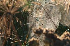 在蜘蛛网的早晨光 库存图片