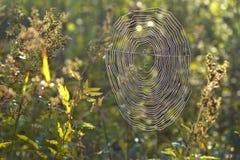 在蜘蛛网的早晨露水 免版税库存照片