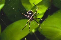 在蜘蛛网的蜘蛛 免版税图库摄影