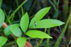 在蜘蛛网的蜘蛛 免版税库存照片