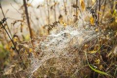 在蜘蛛网的露水在草中 秋天天在森林里 库存照片