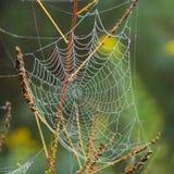 在蜘蛛网的露水 库存图片
