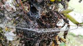 在蜘蛛网的水下落 免版税库存图片