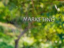 在蜘蛛网,网上数字式营销概念backgr的营销 免版税库存照片